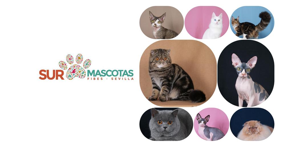 El Club Felino Españolorganiza el I Concurso Felino en SURMascotas 2018